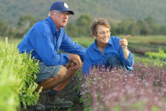Mt Alma Fresh Organics_Gary and Angela inspecting basil crop